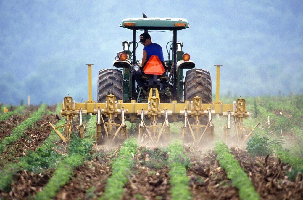 Fachowe zwalczanie chwastów w uprawach ziemniaka