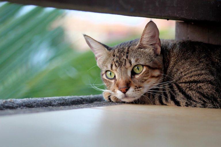 Najważniejsze wskazówki, które powinien znać każdy właściciel kota